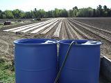 Arrosage printanier - Spring Watering