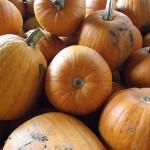 Citrouilles - Pumpkins