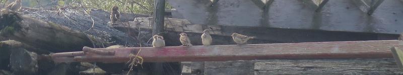 Oiseaux - Birds_S